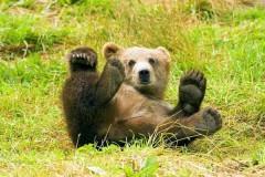 На Камчатке из зоопарка сбегал медвежонок