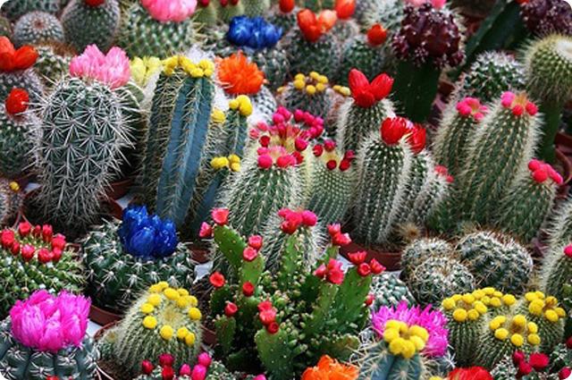 Азалия магазин цветы оптом киев 13