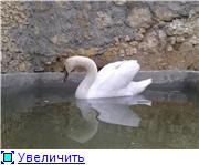 Севастопольский мини-зоопарк