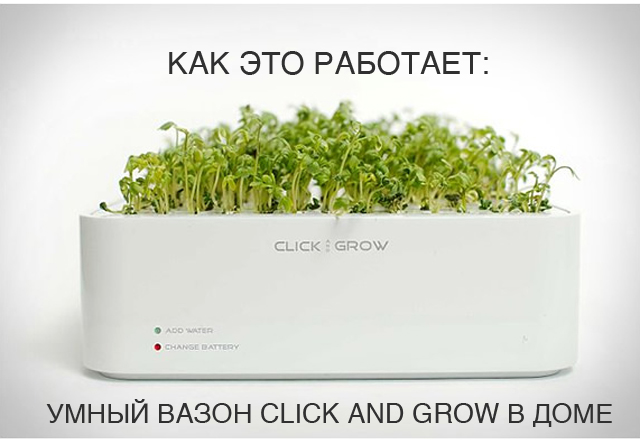 Как это работает: умный вазон click and grow в доме