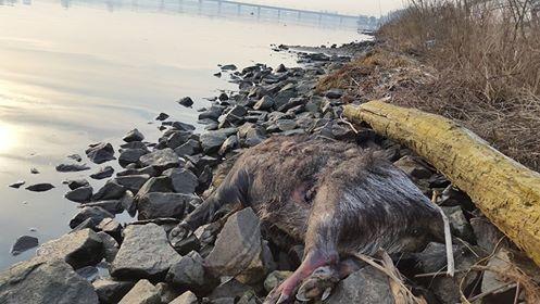 Коммунальные службы отказались убирать мертвых животных
