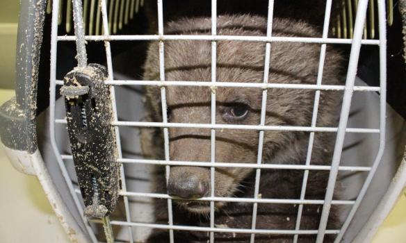 Сейчас животных направили для осмотра в районное ветеринарное учреждение