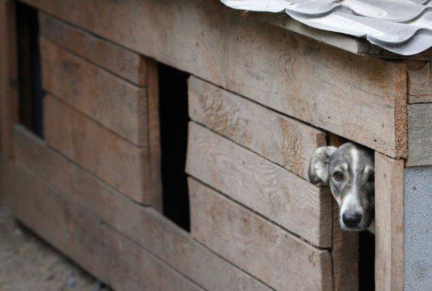 Приют для животных в Пирогово работает с 1994 года