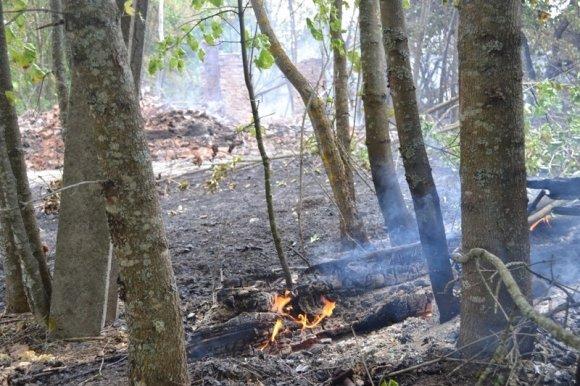 Милиция Киевской области заинтересовалась контрабандой леса из Чернобыльской зоны