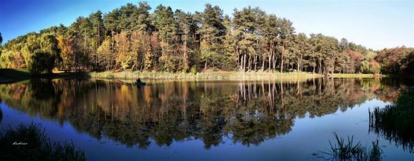 2,6 гектаров леса могут пустить под топор
