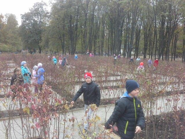 Вокруг лабиринта высадили 3 тысячи деревьев
