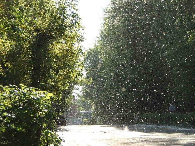 """В """"Киевзеленстрое"""" провели инвентаризацию деревьев"""
