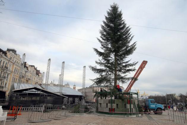 Рекордно высокую 25-метровую пихту привезли из Ивано-Франковской области