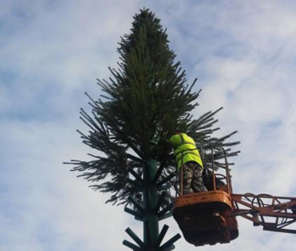 Новогоднюю елку откроют 19 декабря