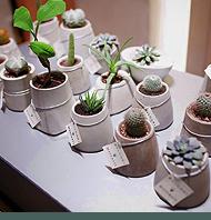 Растения и горшки