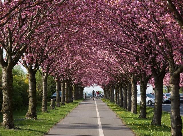 К октябрю в Киеве реконструируют несколько парков