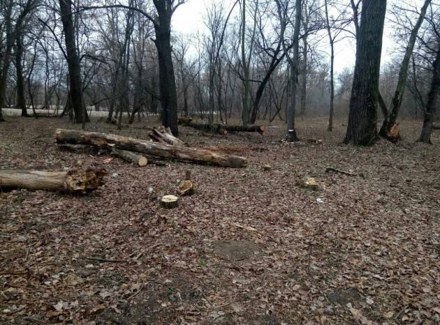 Кто именно и зачем вырубал деревья — не известно