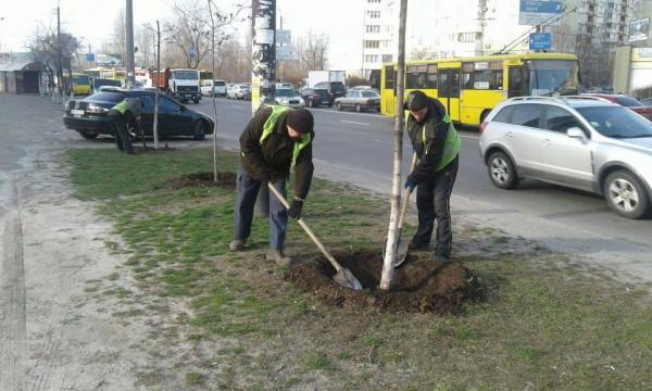 Коммунальщики облагораживают детские площадки, скверы и высаживают кусты