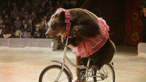 """Украина, вслед за миром, присоедининится ко II Международной акции """"За цирк без животных"""""""
