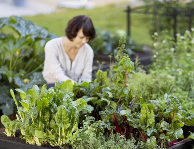 Хаб городского садоводства носит название «Живое пространство»