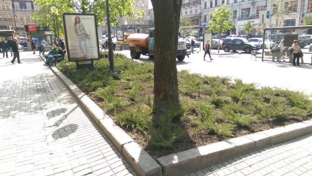 На бульварной части главной улицы страны уже высадили 170 кустов