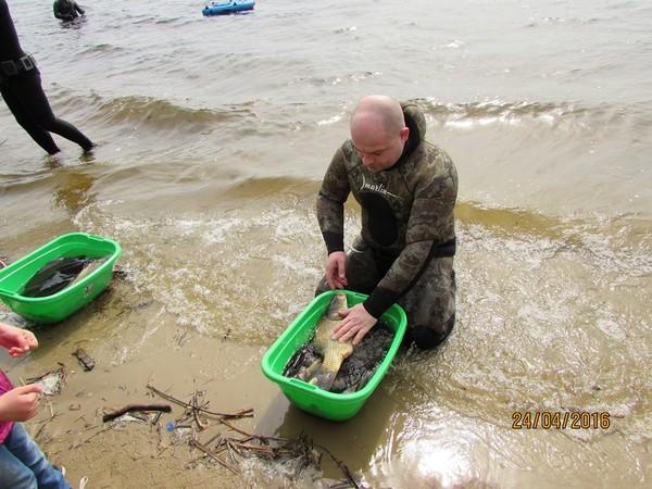 Реку пополнили карпы, щуки, сазаны и другая рыба