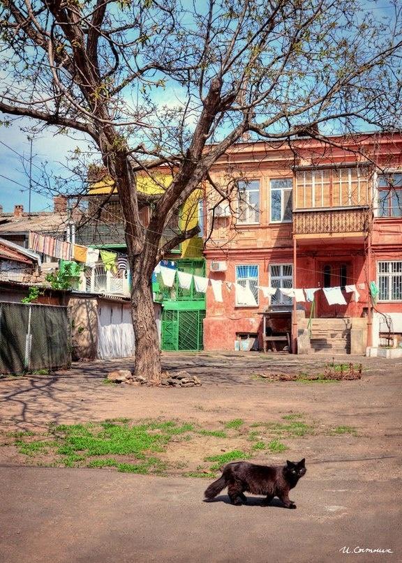Котик-одессит Фото: http://vk.com/public_od_ua