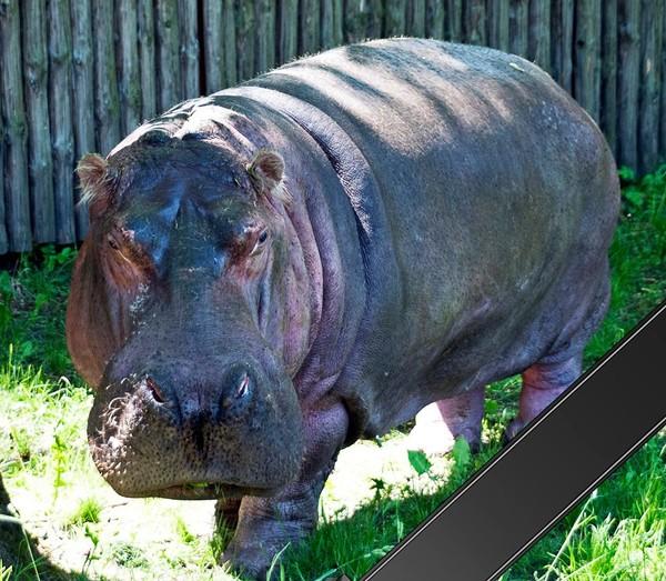 Всех посетителей зоопарка призвали делиться фотографиями с Брестой