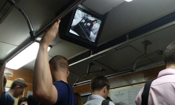 Пассажирам вагонов показали котиков