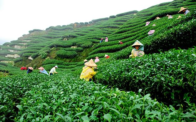 В июле компания Unilever введет в эксплуатацию чайную фабрику в Гостомеле