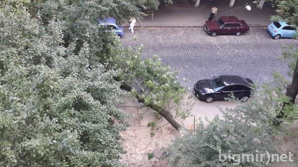 Дерево могло упасть из-за недавнего ремонта теплоцентралей