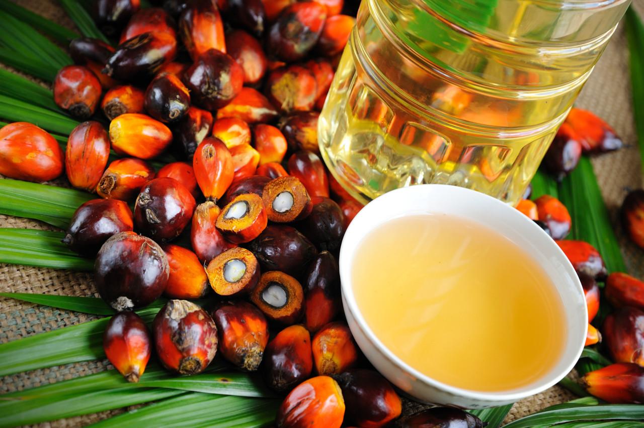 Картинки по запросу Пальмовое масло