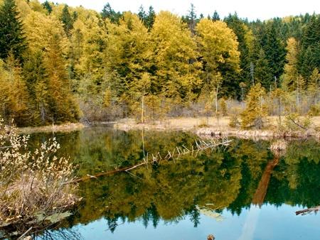 Фото: carpathian.land