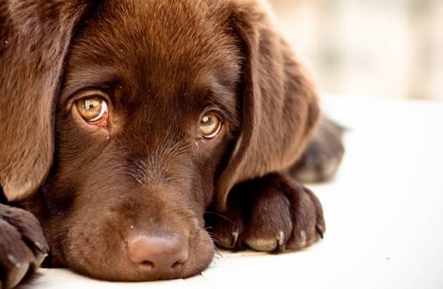Владельцев животных просят быть внимательными