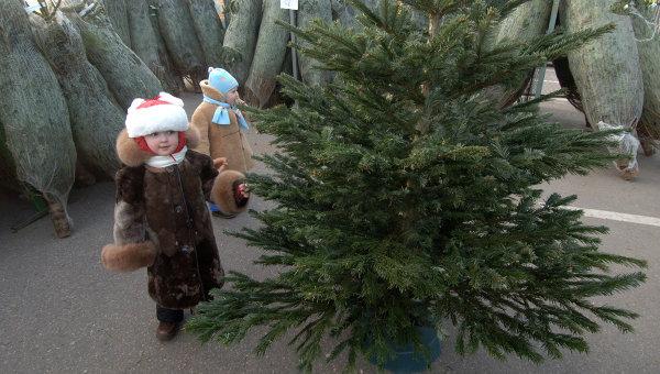 Метровое новогоднее дерево обойдется от 100 гривен