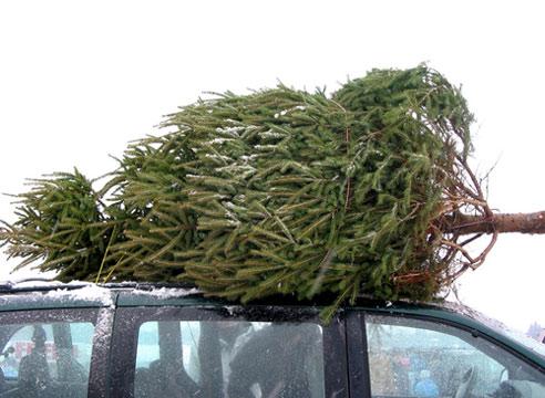 Штраф за срубленное дерево может достигнуть нескольких тысяч гривен