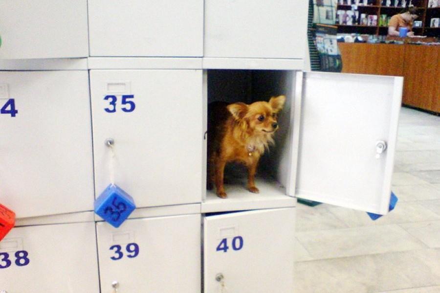 На Оболони появились камеры хранения для собак. Фото