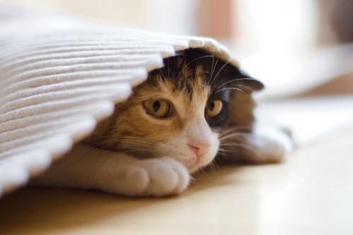 Исследование ученых: котики нервничают и болеют из-за людей