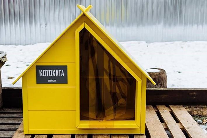 В Киеве начнут устанавливать дома для уличных котиков. Фото