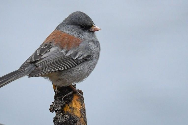 Пение птиц впервые в истории музыки попало в британский чарт