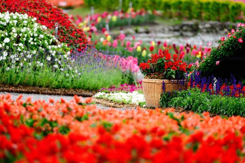 На Певческом поле пройдет масштабная выставка цветов