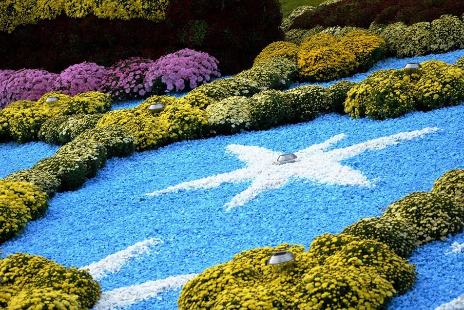 Масштабную выставку хризантем в Киеве решили продлить