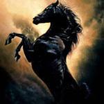 Приключения Черного скакуна