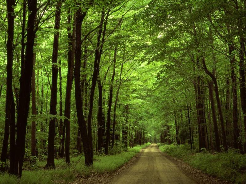 Голосеевский лес.
