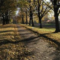Куреневский парк