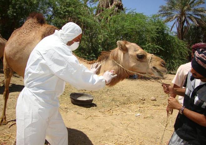 ближневосточный коронавирус респираторного синдрома