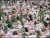 Тысячи обнаженных мужчин и женщин превратились в живую клумбу