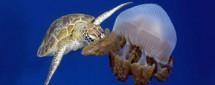 На глубине морской 3D
