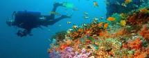 Приключения в подводном мире 4D