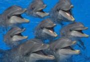 Морган Фримэн окунется в историю про дельфина