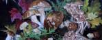 Выставка молодых украинских художниц