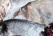 Дни большого улова в ресторане «Mare Azzuro»