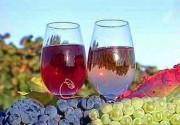 Фестиваль розовых вин в ресторане Пена
