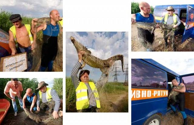 Крокодилица Кеша сбежала от своего хозяина-фотографа в Одессе. Она поселилась в пруду у местного нефтеперерабатывающего завода