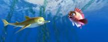Калуокахина. Зачарованный риф